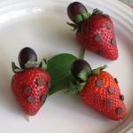 edible ladybugs