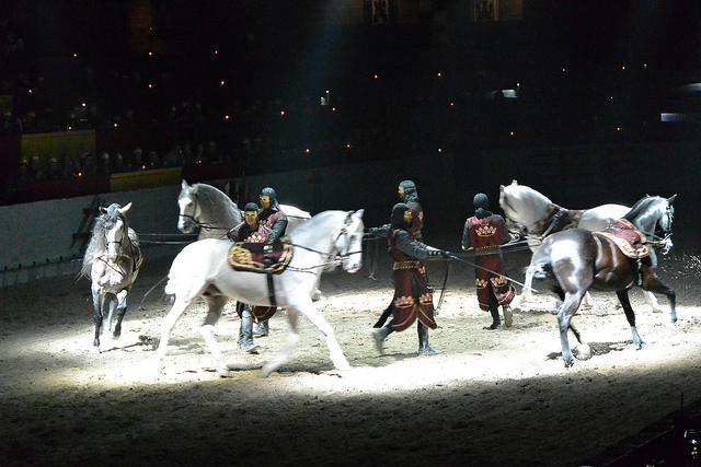 Medieval Times Dallas Horses
