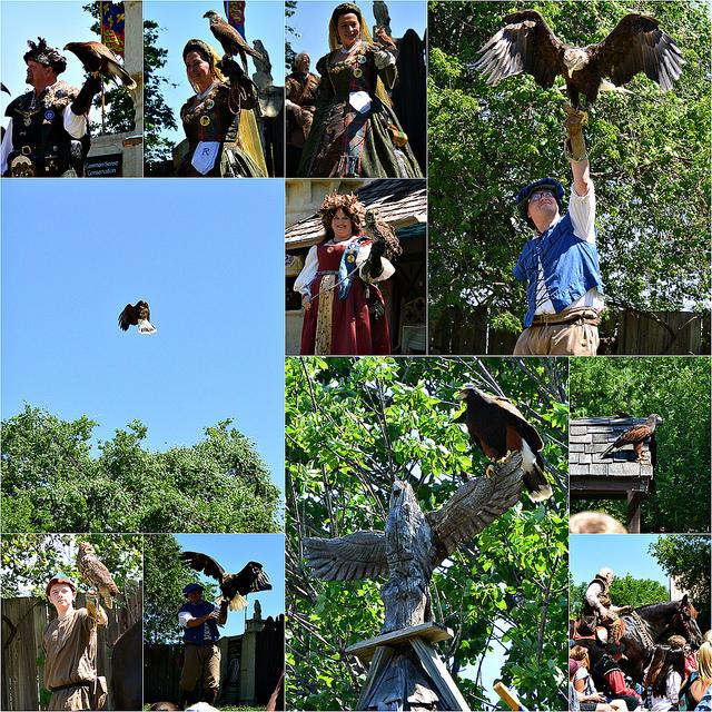 birds of prey collage