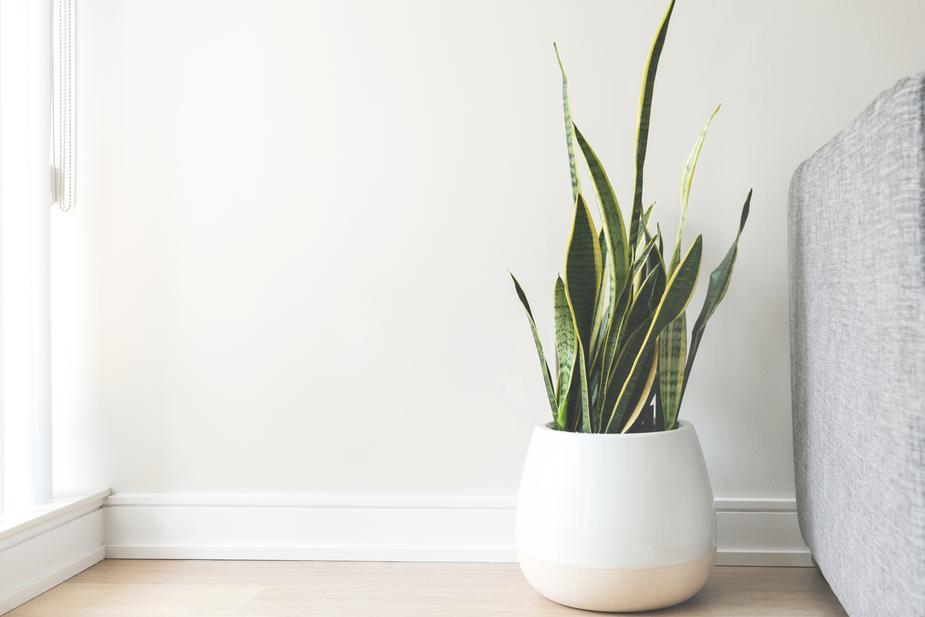 indoor plant hire